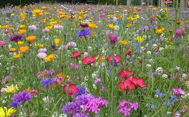 Kräuterwiese, Magerwiese mit vielen Wildblumen